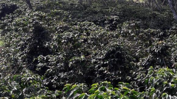 Terreno en Venta, RANCHO COATEPEC VERACRUZ ++ | Se encuentra ubicado en Huatusco Xalapa Totutla Coatepec Veracruz , Coatepec Veracruz  |